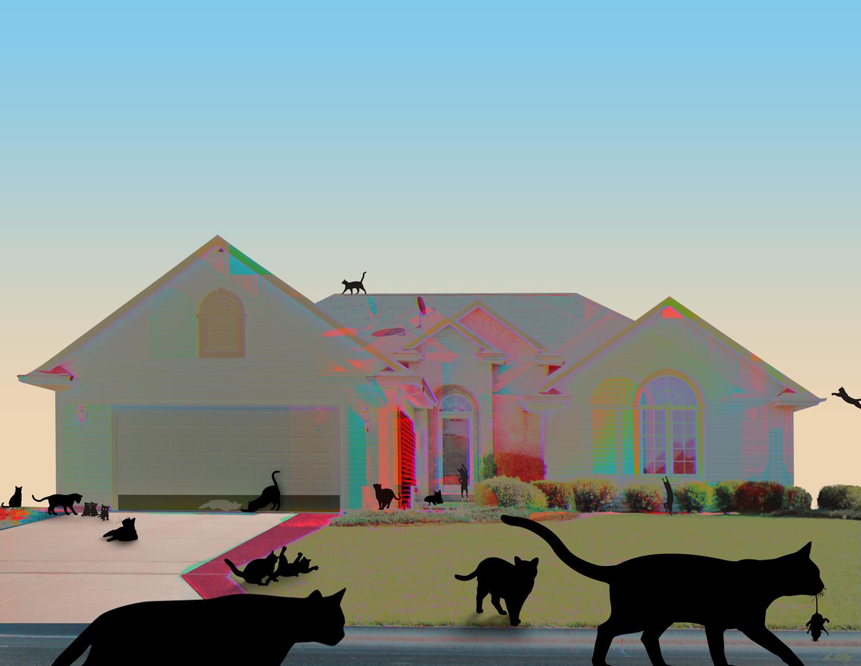Michelle Friesenhahn, Where the Cat Lady Lives